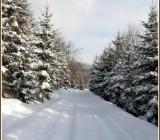 zima16